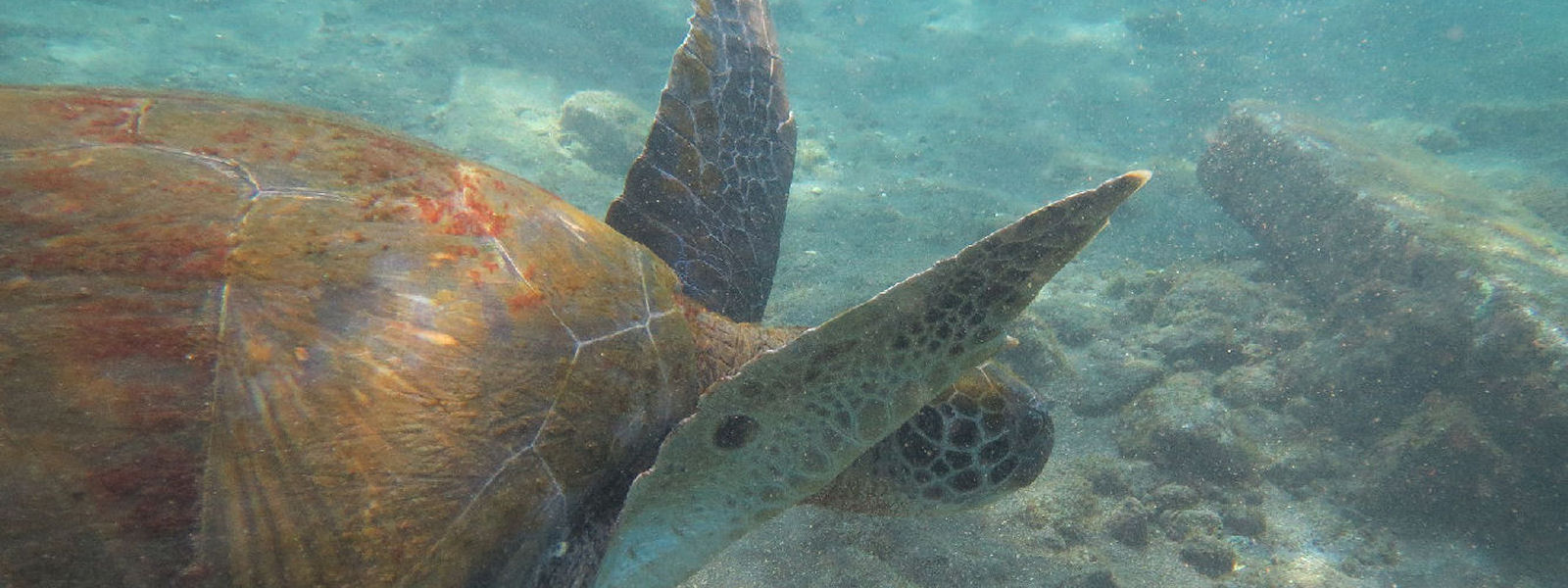 Try diving with Turtles