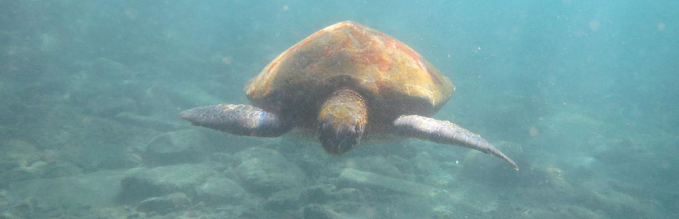 Dive Tenerife Alcala
